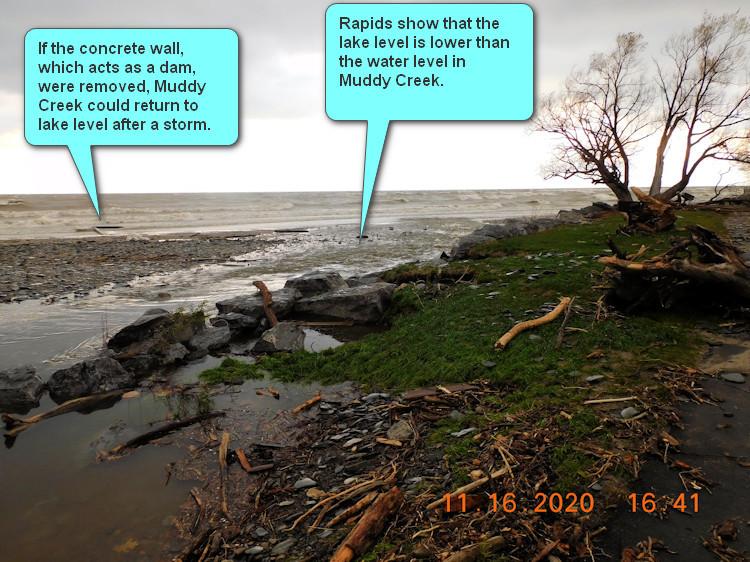 Muddy Creek 2020 11 16 Flodded